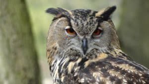 Owls known for their wisdom. We try to do the same with our information here.